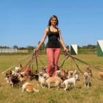 Hundesitter und Dogwalker – Laufend tierisches Nebeneinkommen einstreichen